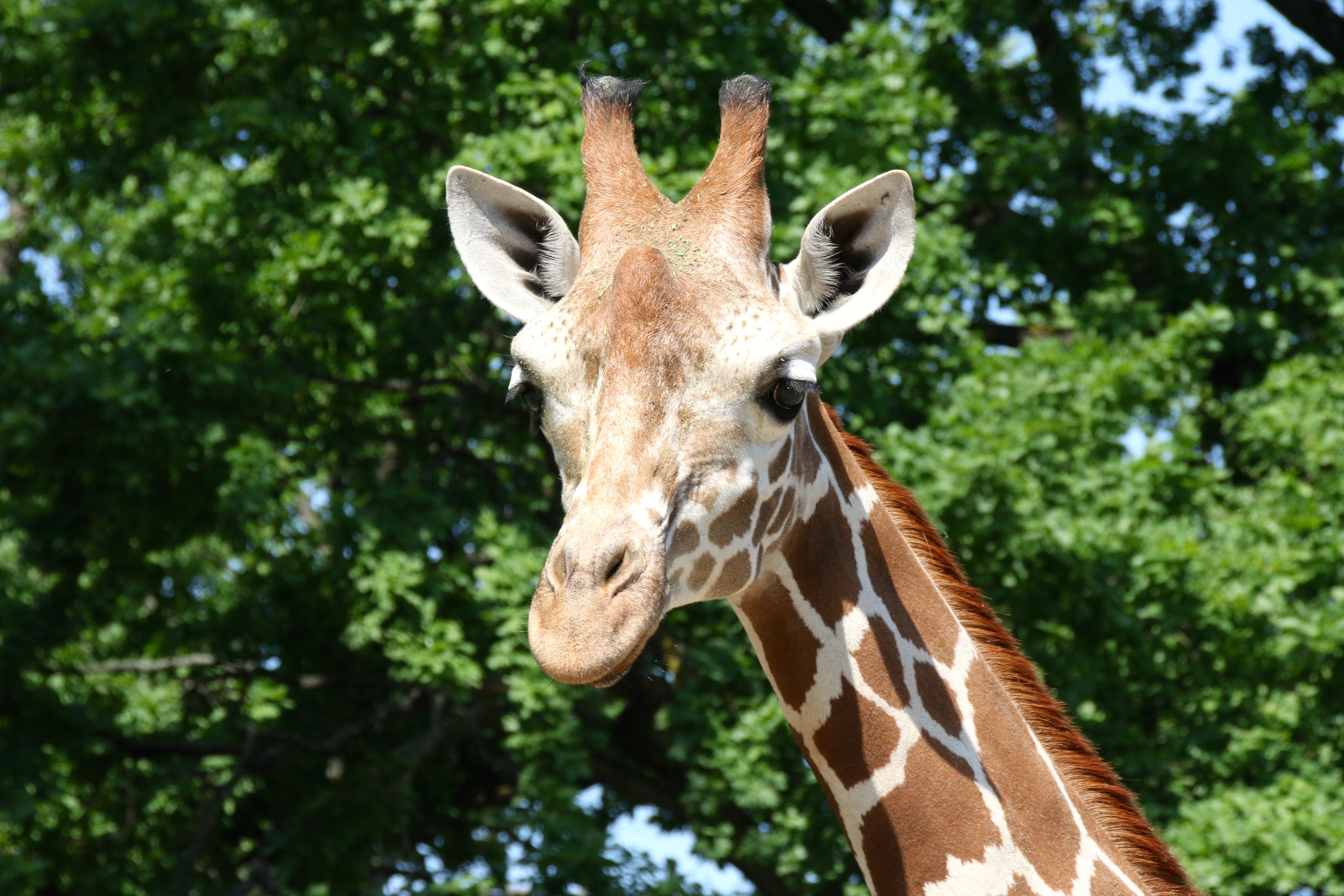 Mugambi - Unser Patenkind im Zoo Berlin