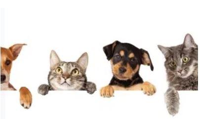 Wohnung Haustierhaltung Katze Hund mieten Vermieten www.happy-immo.de