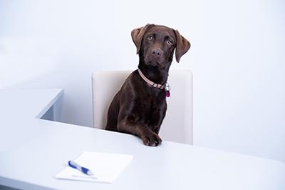 Bild des Firmenhundes Lou am Schreibtisch