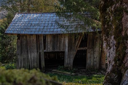 Verlassene Hütte im Wald