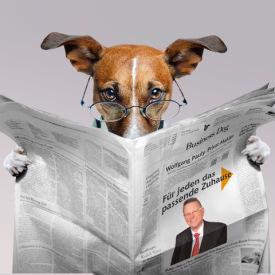 Business-Dog